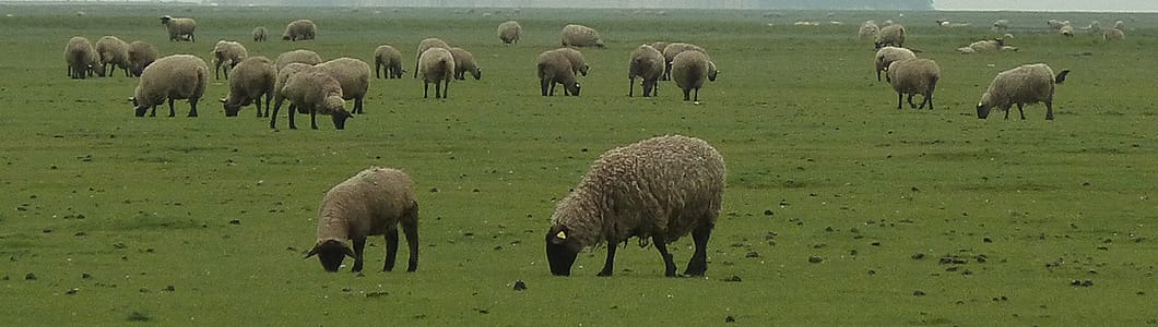 Parasiticides / Sheep and goats / Products / Ceva South Africa