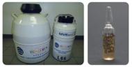 CEVAC® MD HVT + RISPENS
