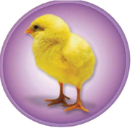 Management of IBD / Poultry / Products / Ceva Africa