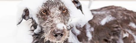 Les maladies de la peau des chiens
