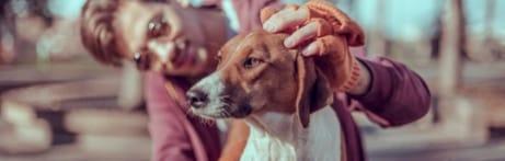 Les parasites peuvent transmettre des maladies: protégez votre chien, protégez-vous !