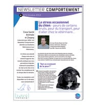Newsletter comportement n°4 - octobre 2013