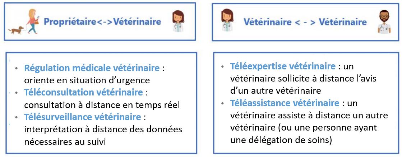 5 actes de la télémédecine vétérinaire